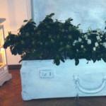 Vecchie valigie e fiori: memorie e sogni da riciclare